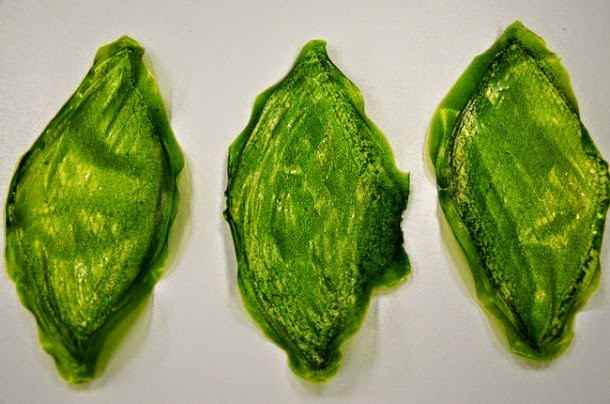 Artificial-Leaf-can-Create-Oxygen-in-Space-3-610x404.jpg
